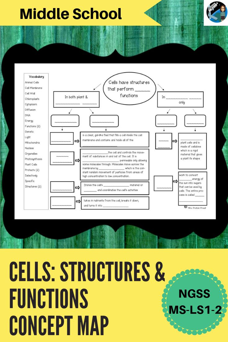 Cells Structures And Functions Concept Map Middle School Science Interactive Notebooks Middle School Science Resources Concept Map