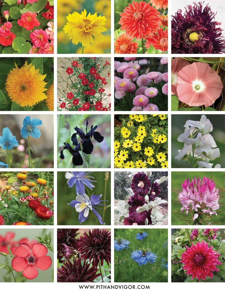 plan a flower cutting garden with cheryl parker