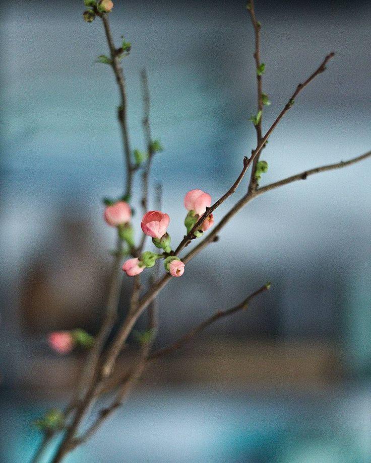 """""""Bo ja już wiosnę to mam w głowie i żadne tam minus tego nie zmieni  #sklepzpotrzebypiekna #saskakepa #springiscoming #flowers #light #inthemoodforspring"""""""