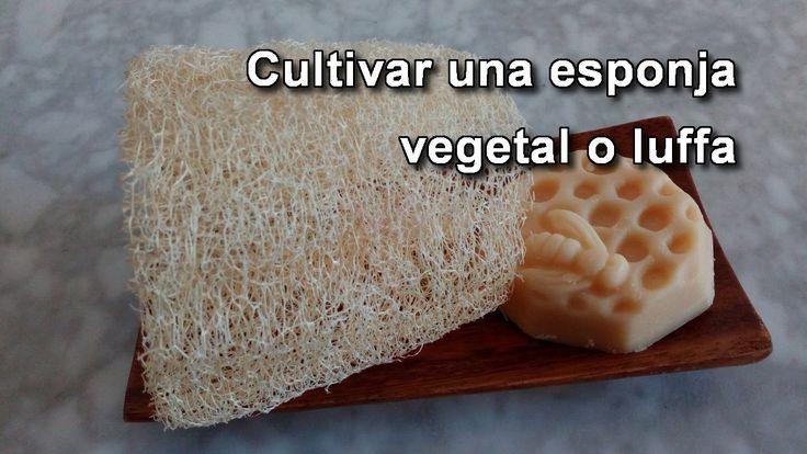 Cómo hacer una esponja vegetal natural  o luffa