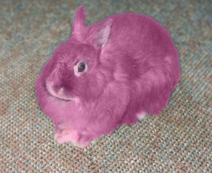 42 best images about the pink rabbit on pinterest