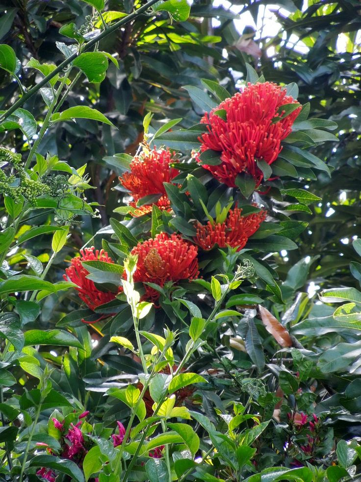 24 best flora