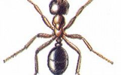 Black garden ants Control   Enviro Pest Solution
