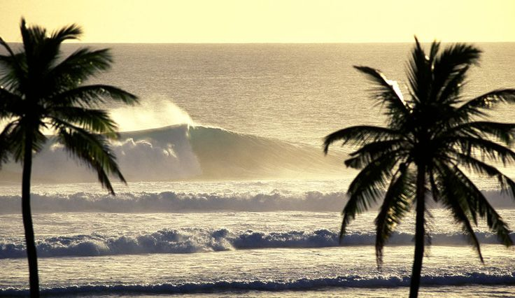 waves: Water Waves, Black And White, Waves Zen, Cal Life, The Ocean, Surfing Up, Palms Trees, The Waves, Summer Summer