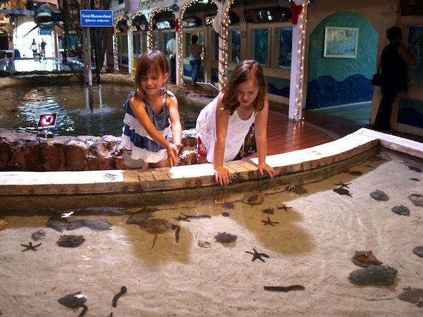 1000 Images About Key West Aquarium On Pinterest