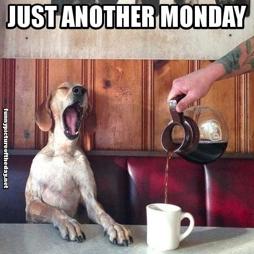 23 best images about Dog Memes on Pinterest | Mondays, Two ...