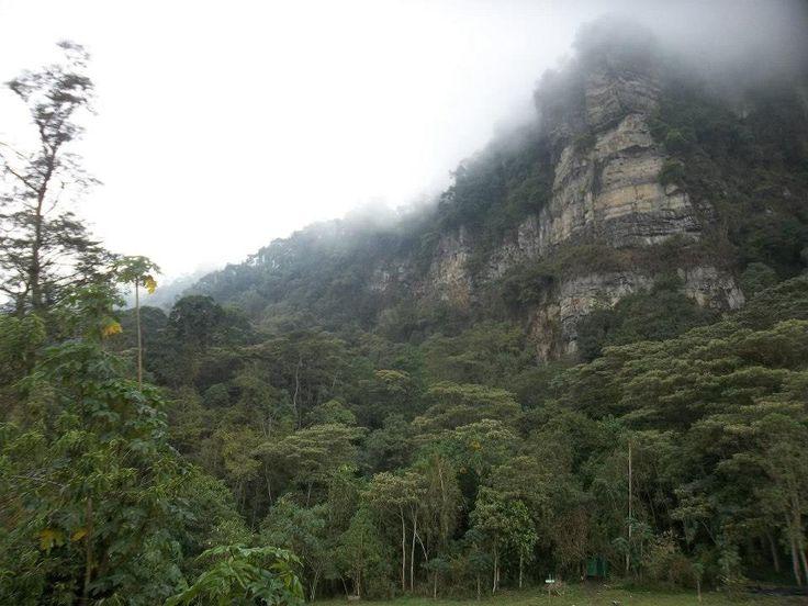 Bosque de niebla, Chicaque Cundinamarca