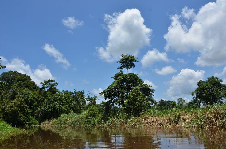 Lower kinabatangan, Sungai Resang,