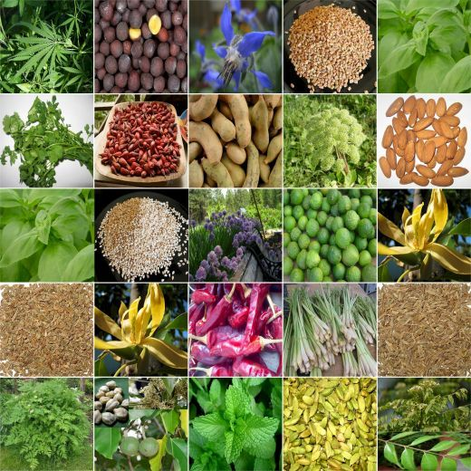 what is the best icar collage for b.tech in food science,hoticulture or dairy technology and what are the average -placements
