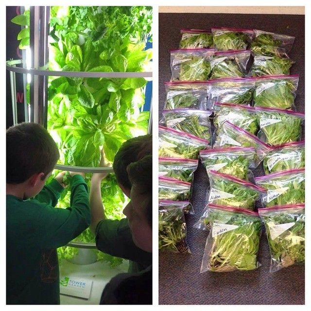 1000+ Images About Aeroponic Garden On Pinterest