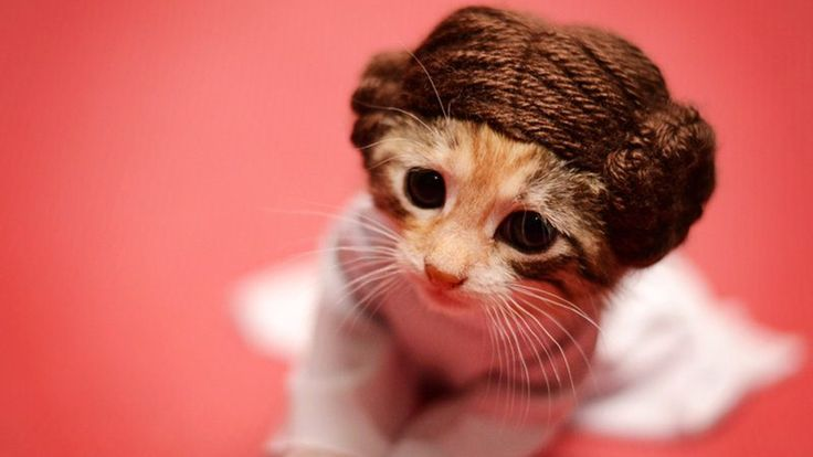 Kitty Leia? Photographer dresses kittens as beloved film and TV characters in order to adopt them out.