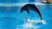 Magnifiques fonds d'écran de dauphin