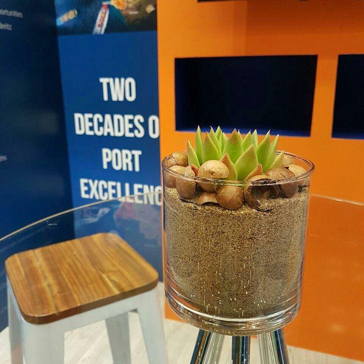 Succulents Exhibition stands decor