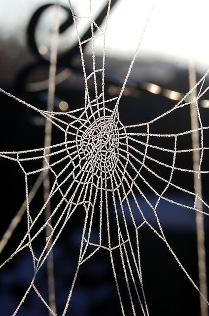Oh the tangled web we weave when we practice to deceive......