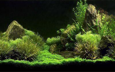 Scarica sfondi alghe, acquario, alghe verdi