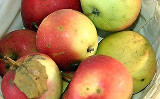 Growing Organic Fruit Trees