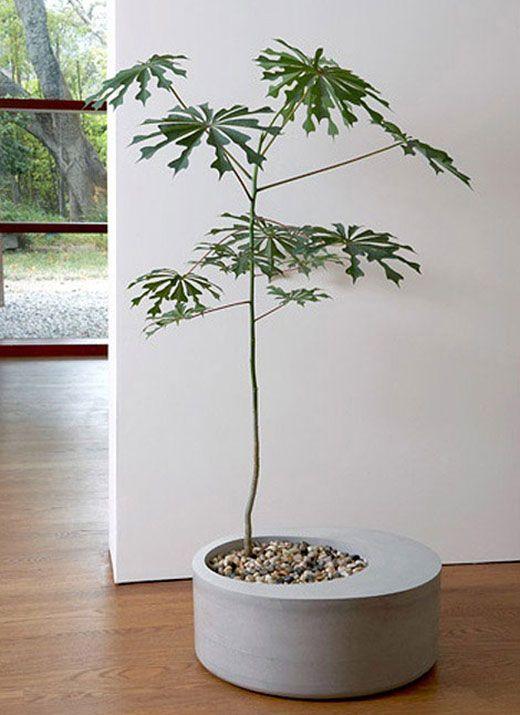 Obleeek Objects stylish home pot plant