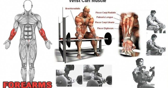 3 Forearm Exercises - Workout For An Often Forgotten Muscle Group http://www.all-bodybuilding.com/2016/12/3-forearm-exercises-workout-for-often.html