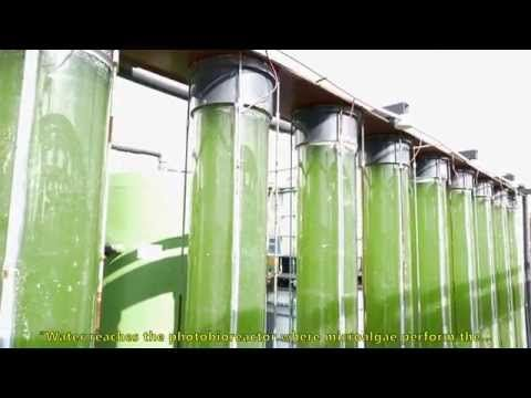 New Technology to Recycle Wastewater. #Olives and #OliveOil are not only healthy, but this new technology will make the production safer for the environment!