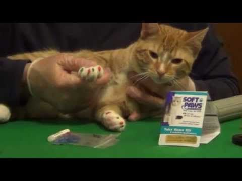 How to Apply Soft Paws Nail Caps to a Cat