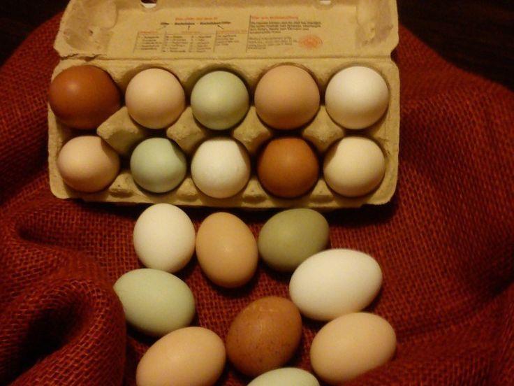 Wir halten verschiedene große Rassen, u. a. Bresse Gauloise, Orpington, Jersey Giants. Neuigkeiten vom Hof - Tipps zur Hühnerhaltung - Hühner und Bruteier kaufen.