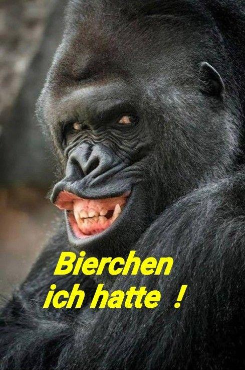 Bier lustig witzig Sprüche Bild Bilder. Gorilla Bierchen ...