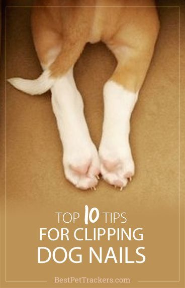 Many dog owners are often anxious about how to cut their dog's nails safely and…