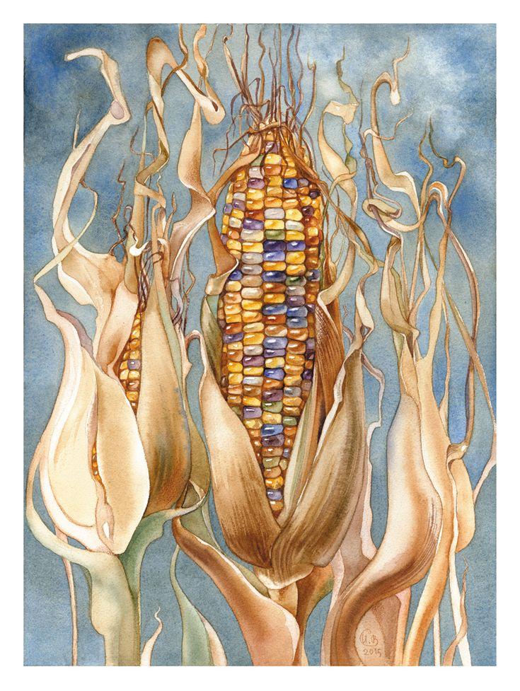 Просмотреть иллюстрацию Кукуруза из сообщества русскоязычных художников автора Ирина Винник в стилях: Графика, Декоративный, нарисованная техниками: Акварель.