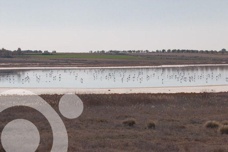 Villacañas lagoon