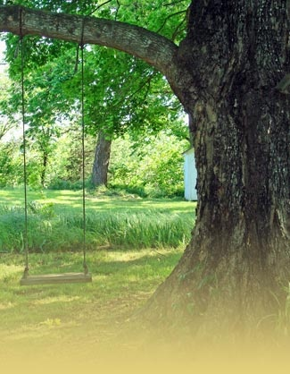 I would most definitely have a tree swing
