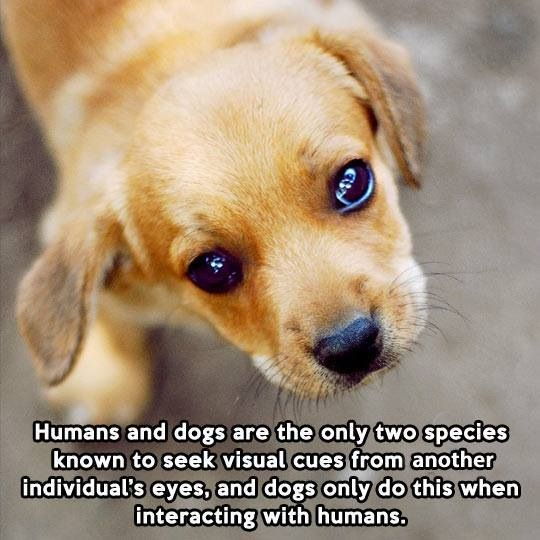 dog and human relationship facts