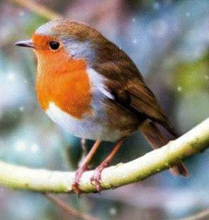 Image result for robins
