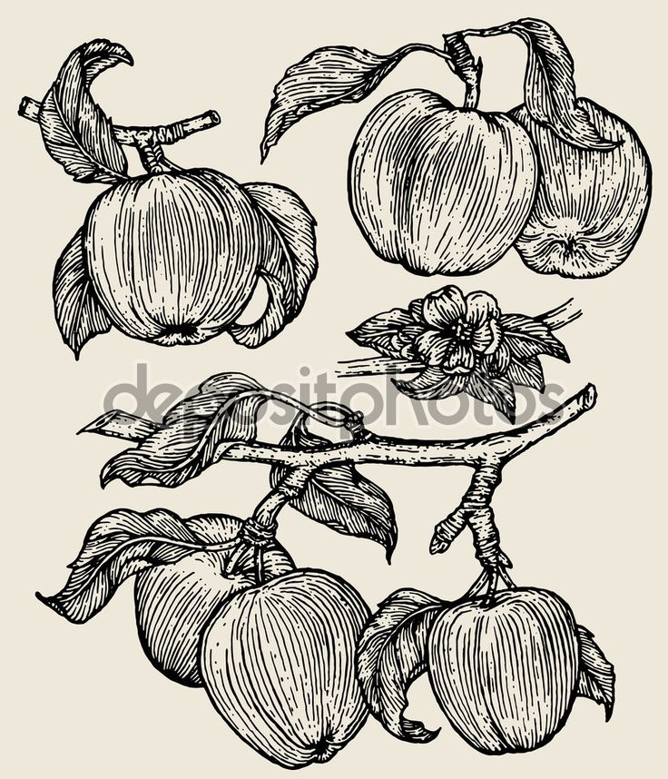 яблоки - Стоковая иллюстрация: 68208119