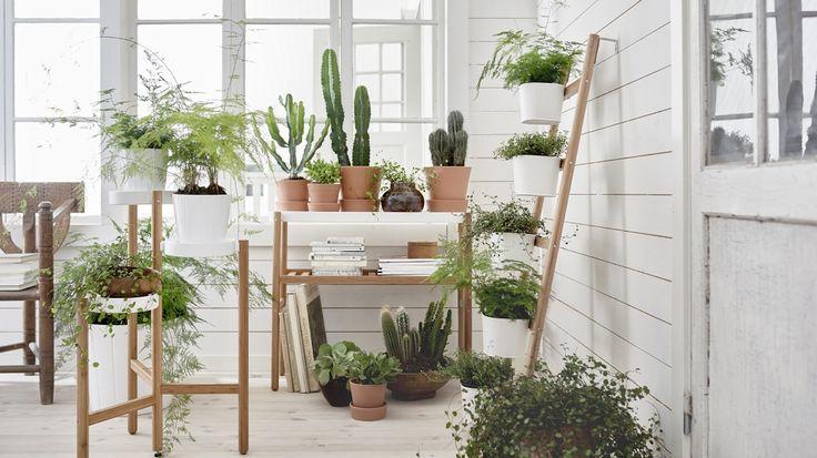 Plantes vertes ikea