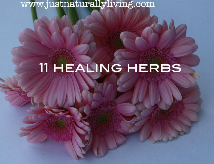 Turning to pharmaceuticals when you are feeling under the weather is not always the answer, sometimes a more natural option, such as a herb, is not only a safer option but a healthier one too. Take peppermint for example, it has been shown effective in treating ailments like a simple stomach ache or more serious, …