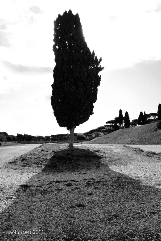Rome, Circo Massimo. The crowds long gone...
