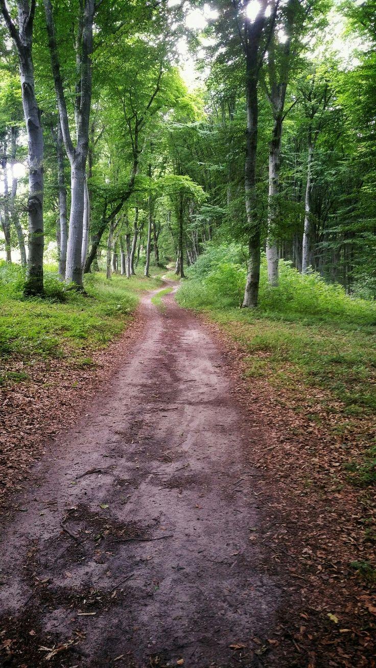 Făget forest - Cluj-Napoca