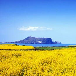 4D Wonderfull Jeju Island. Let's go to Jeju Island, Seoul with your family. This package include 3 nights accommodation at Park Side Hotel/Hawai Hotel, meals, transfer Jeju international airport - Hotel. Exclude airline ticket. Starting from USD 360, valid until 30 September 2014. Book now by phone +6221 500833 or email to: cs@ezytravel.co.id