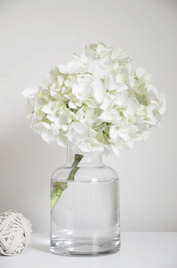 A single hydrangea sprig in a glass vase