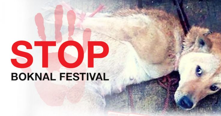 STOP The BOKNAL Korean Dog Meat Festival Now! Petitioning: President Park Geun-hye of South Korea. August 2016 Please sign the petition.