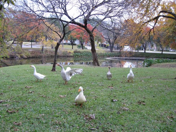 Highland Park, Dallas - where I lived as a child