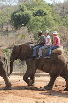 10 Things To Do in the Lowveld: Ride an elephant in Hazyview at Elephant Whispers