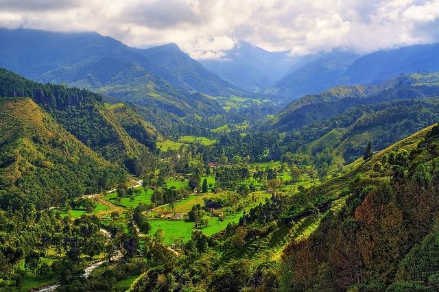 Valle de Cocora- Salento - Quindio - Colombia