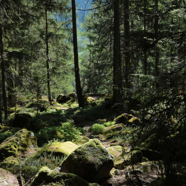 Venture into the Austrian forests and you will feel like you are in an episode of The X-Files, surrounded by tall pine trees and the scenic beauty of nature. Bring your production to this enchanting location and capture its magic.