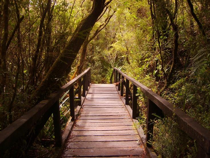 Parque Nacional Chiloé. Foto de Cristián Mery G.