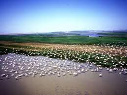 Imagini pentru delta dunarii imagini