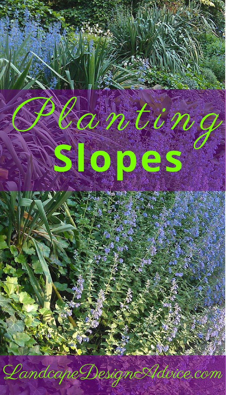 Landscaping steep slopes cats landscaping and the o 39 jays for Hillside landscaping plants