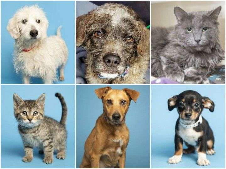 So Cute These Pets Are Up For Adoption Right Now In The Valley