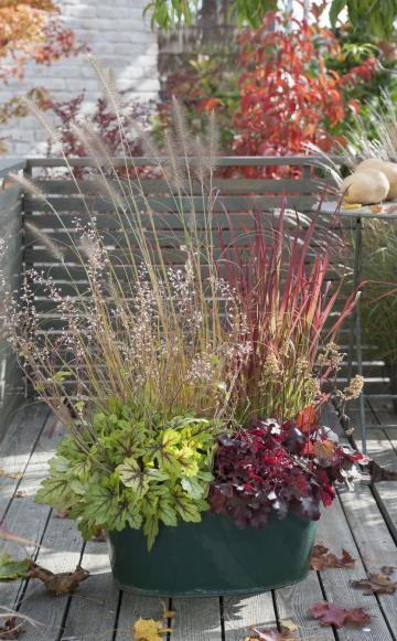 Stauden wie das Purpurglöckchen 'Coco' (Heuchera) oder Kissen-Purpurglöckchen 'Spotlight' (Heucherella) bestechen neben ihren feinen Blüten zudem noch mit schönem Blattschmuck und bilden in Kombination mit dem Japanischen Blutgras 'Red Baron' und Lampenputzergras auch im Herbst noch einen hübschen Farbklecks auf der Terrasse