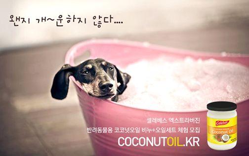 반려동물을 위한 셀레베스 엑스트라버진  코코넛오일 비누 + 셀레베스 코코넛오일(100ml) 샘플 체험단 모집합니다